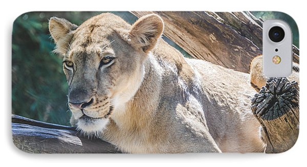 The Lioness IPhone Case by David Collins
