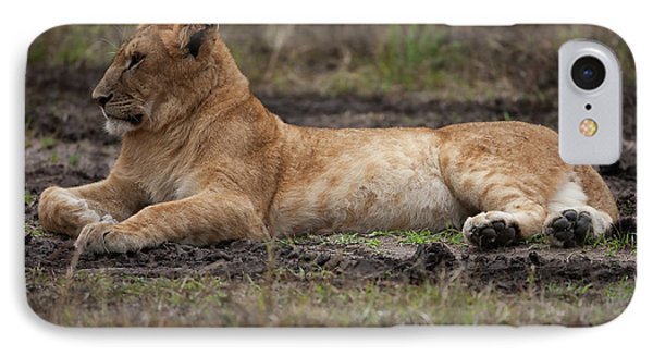 The Lioness IPhone Case by Nichola Denny