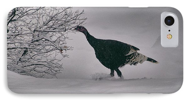 The Lone Turkey IPhone Case by Jason Coward