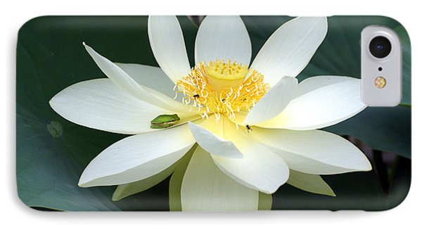 The Lotus Flower The Frog And The Bee IPhone Case