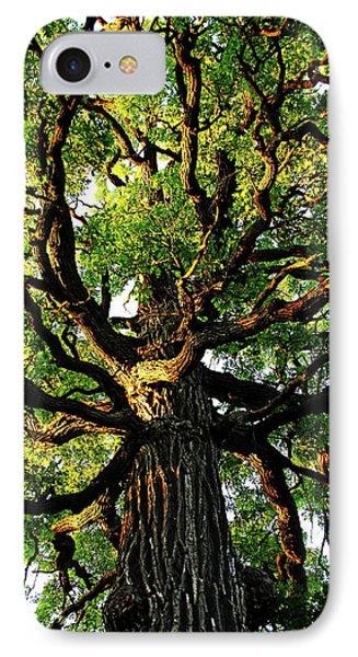 The Mighty Oak IPhone Case by Debbie Oppermann