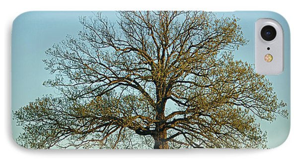 The Mighty Oak In Spring IPhone Case by Cricket Hackmann