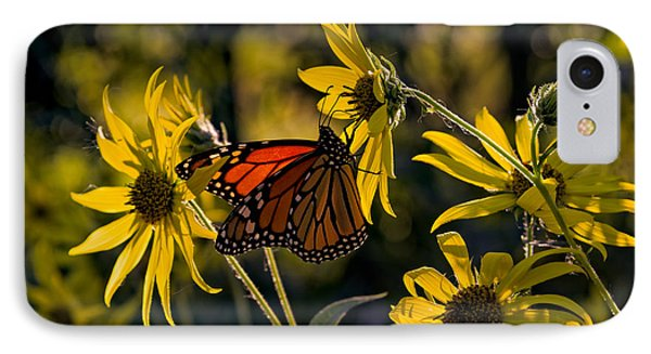 The Monarch And The Sunflower IPhone Case by Rick Berk