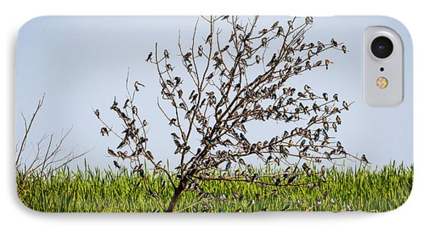 IPhone Case featuring the photograph The More The Merrier- Tree Swallows  by Ricky L Jones