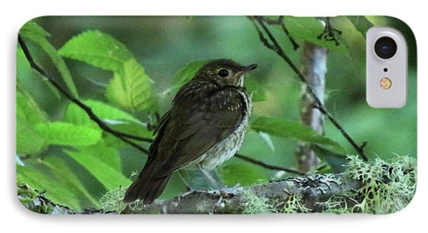 ..the Mysterious Thrush.. IPhone Case by I'ina Van Lawick