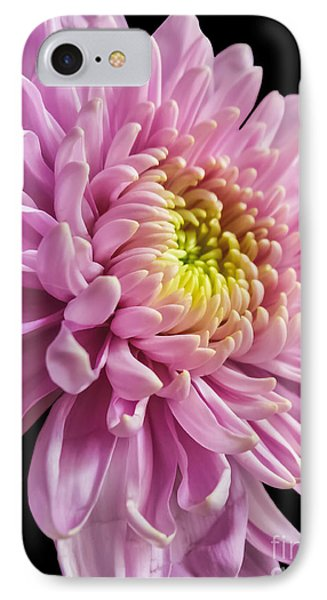 The One And Only Dahlia  IPhone Case