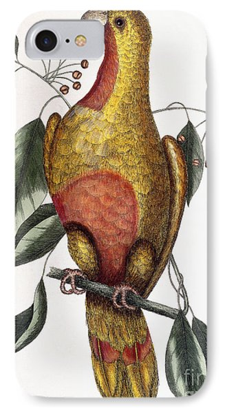 The Parrot Of Paradise, Psitticus Paradisis IPhone Case by Mark Catesby
