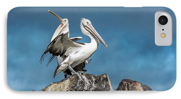 The Pelicans IPhone Case by Racheal Christian