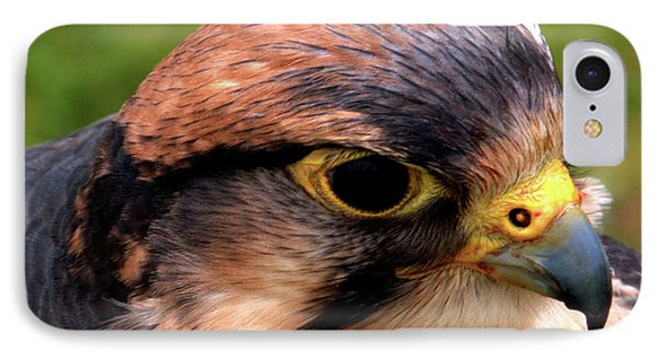 The Peregrine IPhone Case by Stephen Melia