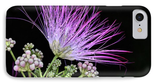 The Pink Mimosa Flower IPhone Case by JC Findley