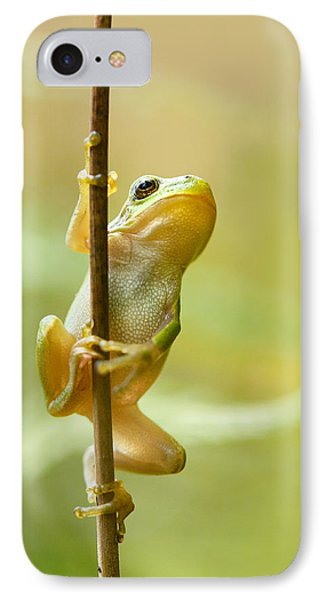 The Pole Dancer - Climbing Tree Frog  IPhone 7 Case by Roeselien Raimond