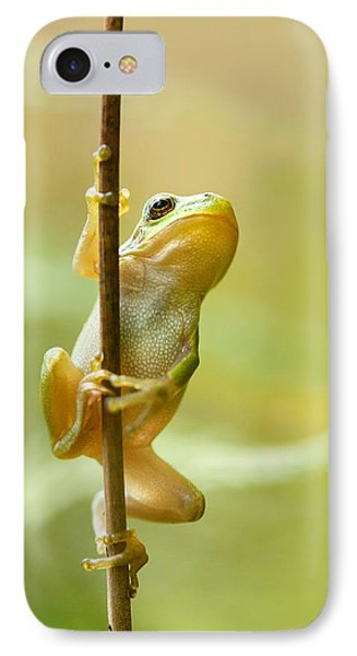 The Pole Dancer - Climbing Tree Frog  IPhone Case by Roeselien Raimond