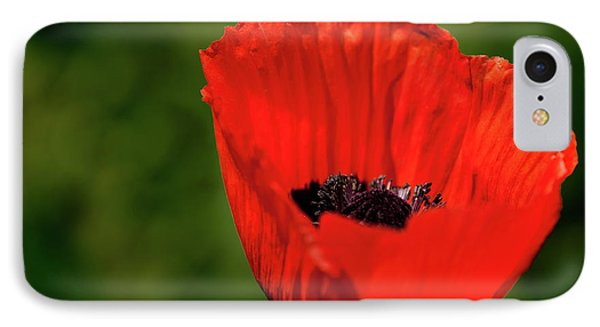 IPhone Case featuring the photograph The Poppy Next Door by Onyonet  Photo Studios