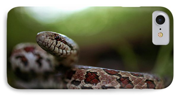 The Prairie Kingsnake IPhone Case by Kyle Findley