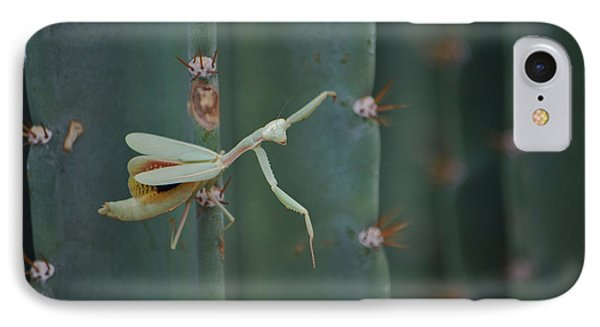 IPhone Case featuring the photograph The Praying Mantis by Donna Greene