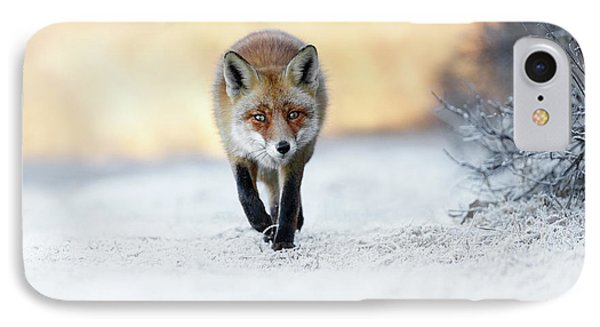 The Red, White And Blue - Red Fox In The Snow IPhone Case