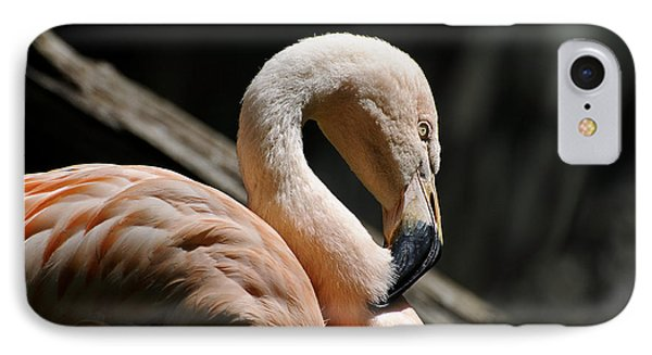 The Sacred Old Flamingoes Phone Case by Lois Bryan