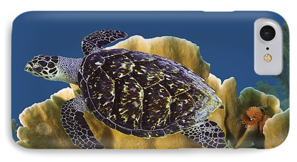 IPhone Case featuring the photograph The Sea Turtle by Paula Porterfield-Izzo