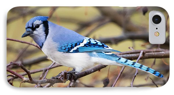 The Winter Blue Jay  IPhone Case