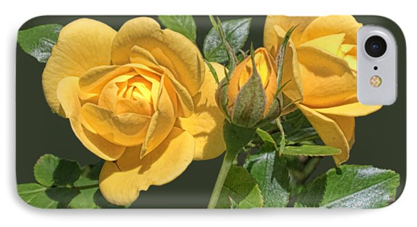 The Yellow Rose Family IPhone Case by Daniel Hebard