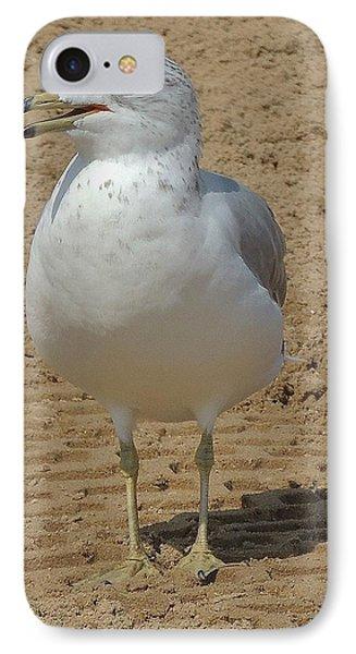 Belmont Beach Bird IPhone Case by Todd Sherlock