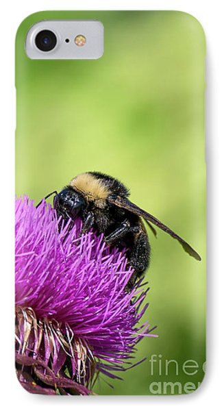 Thistle And Bee IPhone Case by Liz Masoner