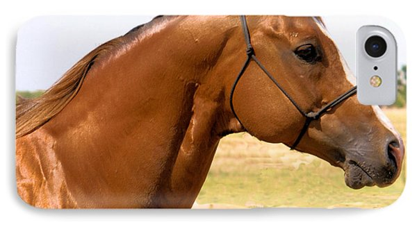 Thoroughbred Head Shot IPhone Case by Cheryl Poland