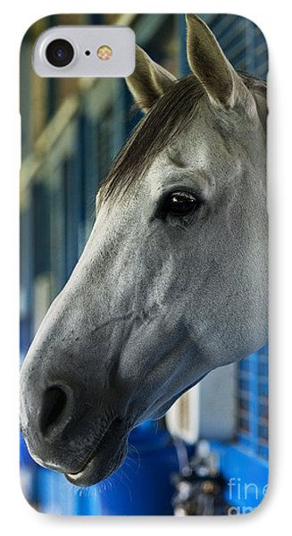Thoroughbred IPhone Case by John Greim