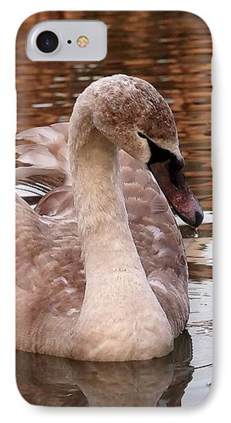 Thoughtful - Juvenile Mute Swan IPhone Case by Gill Billington