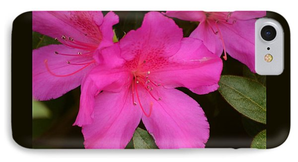 Three Azaleas IPhone Case by Warren Thompson