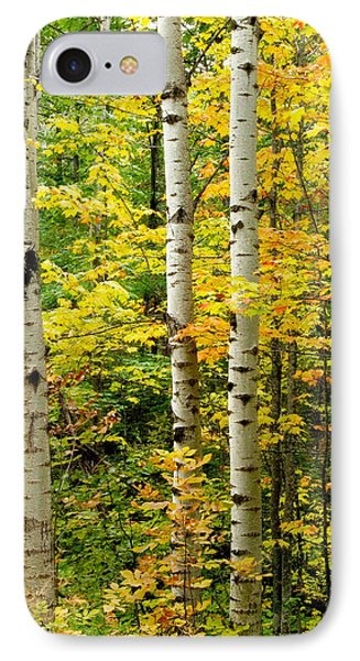 Three Birch IPhone Case