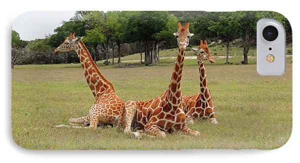 Three Giraffe At Fossil Rim IPhone Case by Jayne Wilson