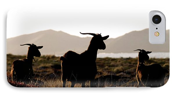 IPhone Case featuring the photograph Three Goats by Pedro Cardona