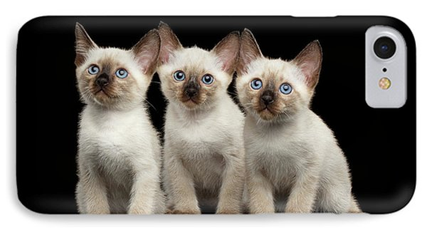 Cat iPhone 7 Case - Three Kitty Of Breed Mekong Bobtail On Black Background by Sergey Taran