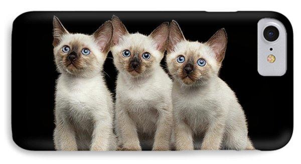Three Kitty Of Breed Mekong Bobtail On Black Background IPhone Case by Sergey Taran