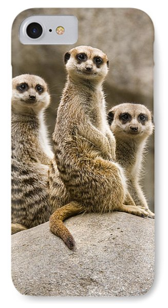 Meerkat iPhone 7 Case - Three Meerkats by Chad Davis