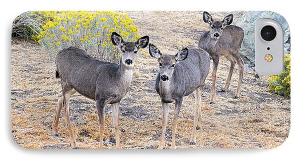 IPhone Case featuring the photograph Three Mule Deer In High Desert by Frank Wilson