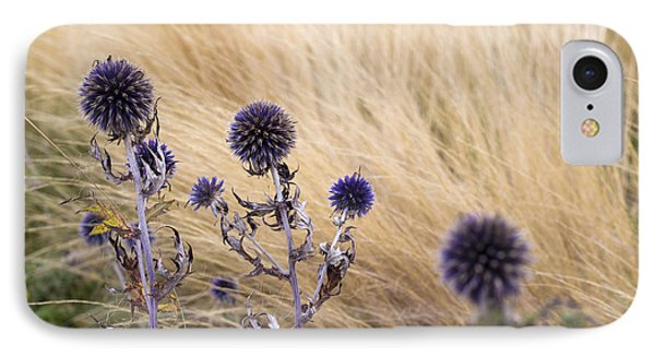 Three Purple Echinops IPhone Case by Helga Novelli