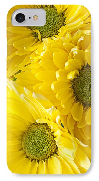 Three Yellow Daisies  IPhone Case