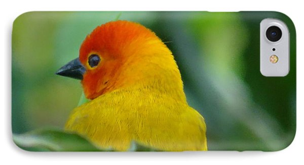 Through A Child's Eyes - Close Up Yellow And Orange Bird 2 IPhone Case by Exploramum Exploramum