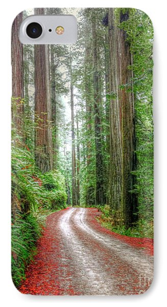 Through The Redwood Forest IPhone Case