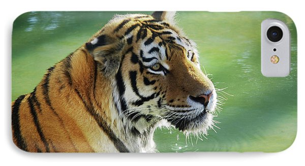 Tiger In The Water IPhone Case by Carlos Caetano