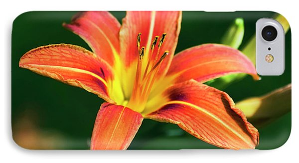 Tiger Lily Phone Case by Christina Rollo