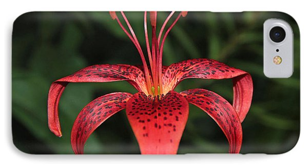 Tiger Lily IPhone Case by Sergey Lukashin