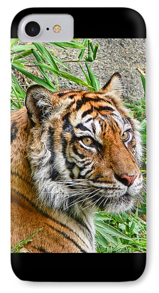 Tiger Portrait Phone Case by Jennie Marie Schell