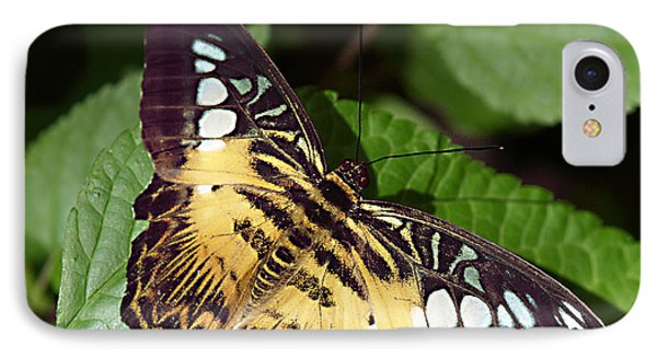 Tiger Print --- Clipper Butterfly IPhone Case