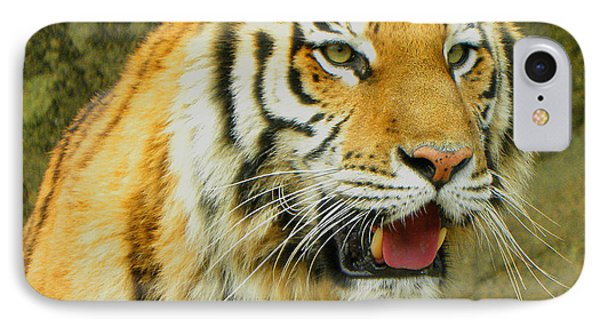 IPhone Case featuring the photograph Tiger Stare by Sandi OReilly