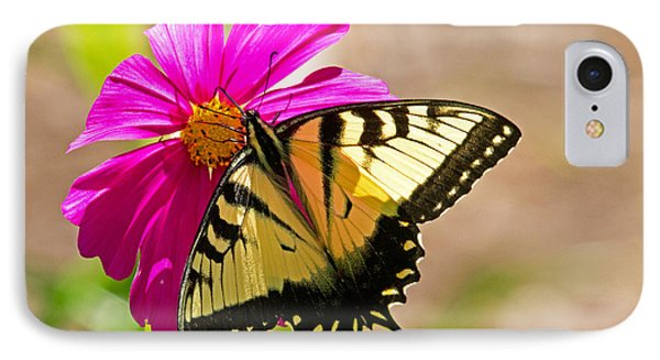 Tiger Swallowtail Butterfly. Phone Case by David Freuthal