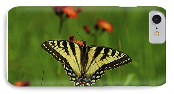 Tiger Swallowtail Butterfly IPhone Case by Nancy Landry