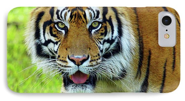 Tiger The Stare IPhone Case